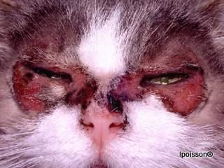 clinique veterinaire acacias dermatologie poisson