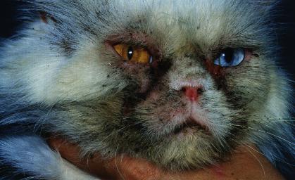 clinique veterinaire acacias orleans dermatologie chien chat poisson