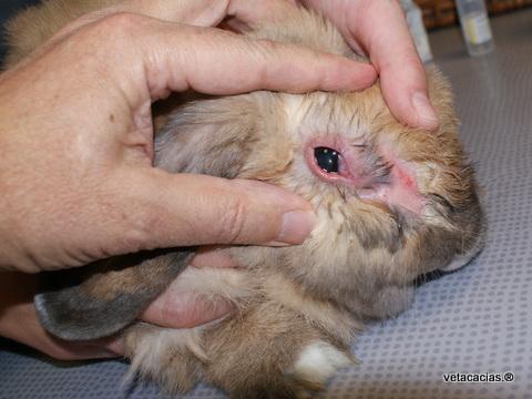 clinique veterinaire orleans nac lapin poisson veto dermato chirurgie