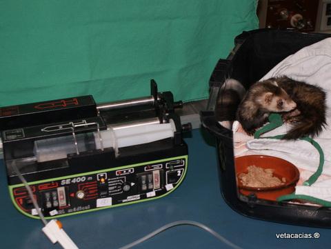 clinique veterinaire orleans nac furet poisson veto dermato chirurgie