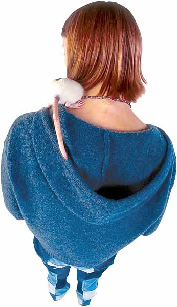 clinique veterinaire orleans nac lapin poisson veto dermato chirurgie rat