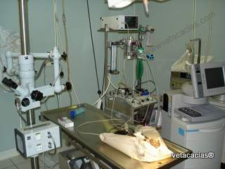clinique veterinaire acacias orleans hospitalisation urgence